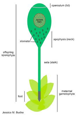 Tree Plant Roots PhD Dissertation Proposal - Write a